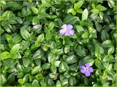 Valley growers nursery inc plant gallery mightylinksfo